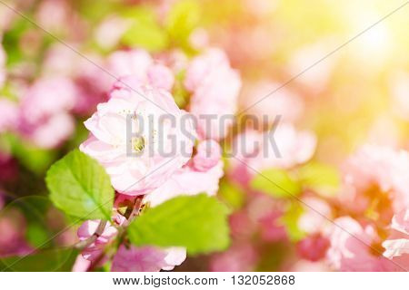 Blossoming tree on blurred nature background