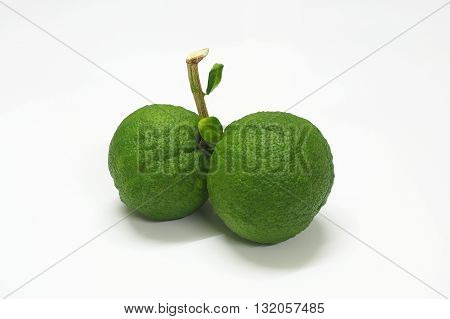 Oranges are green before they ripen and orange tree leaves Auspicious fruit chinese.