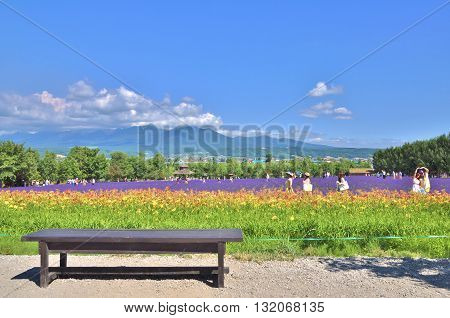 Hokkaido, Japan - July 23, 2013: The wooden bench in front of rainbow flower field at Tomita farm in Hokkaido, Japan on July 23, 2013.