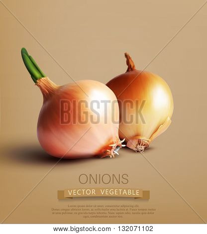 vector two onions