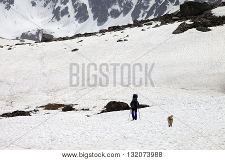 Hiker and dog in snowy mountains at spring. Turkey Kachkar Mountains (highest part of Pontic Mountains).