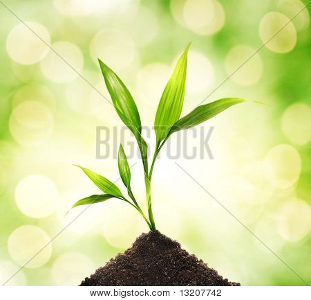 Young plant over abstract blurred background