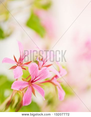 Beautiful flowers with nice defocused background