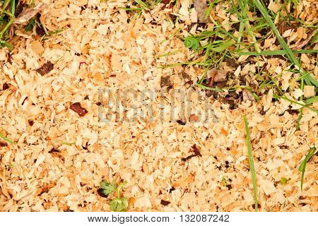 Sawdust Of Dry Alder Wood With Pieces Of Dry Brown Bark On Ground With Grass.