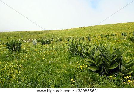 Alpine Fields Of Semnoz In Savoy, France