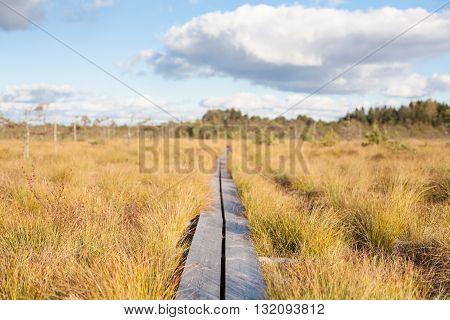 Serene rural boardwalk on a field leading to infinity