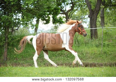 Nice Pony Running On Pasturage