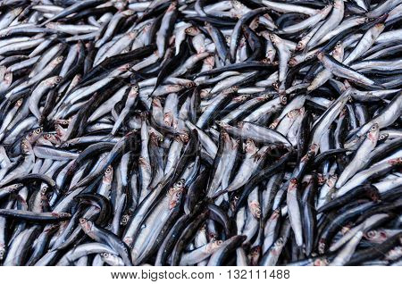 A catch of fresh anchovies for sale at a market.