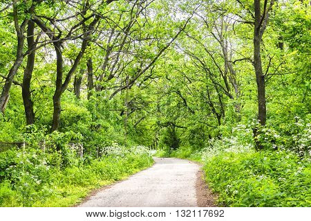 Road In The Spring Forest