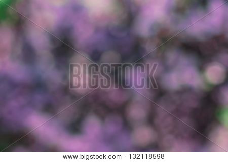 Beautiful sparkling abstract violet nature bokeh background defocused