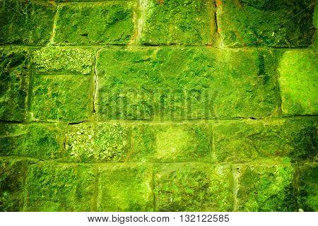 Mossy Green Brick Wall