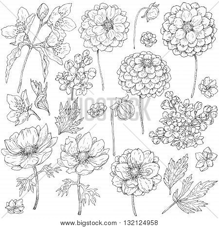 Hand drawn set of doodle flowers. Black and white flowers buds and leaves for coloring. Floral elements for decoration. Vector sketch.