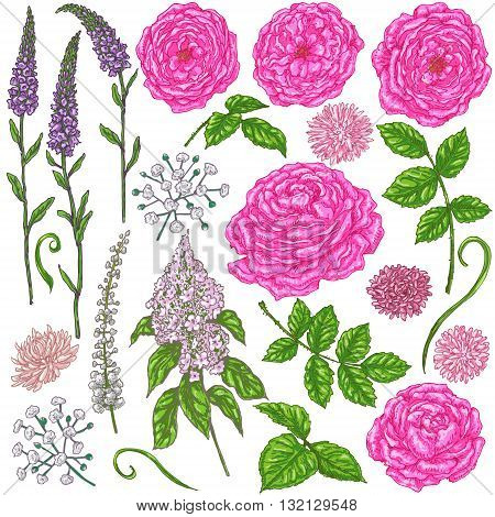 Hand drawn set of flowers. Pink roses small flowers buds and green leaves isolated on white. Floral elements for decoration. Vector sketch.