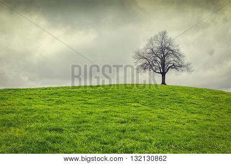 Dramatic sky over old lonely tree - Lonely tree