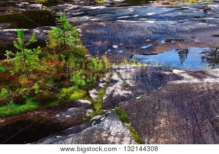 Stony Ground in a Northern Forest (Karelia, Russia). Site of the White Sea Petroglyphs.
