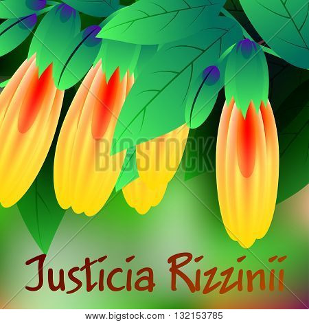 Beautiful spring flowers Justicia rizzinii. Cards or your design with space for text. Vector illustration