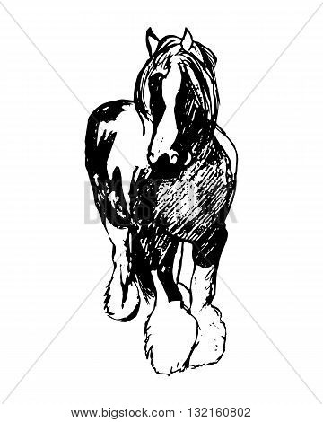 Graphic image of a large horse. Purebred heavy horse hairy feet. Horse pattern on a white background. Abstraction vector illustration