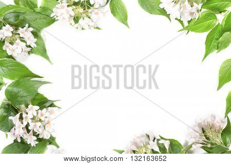 Panoramic Green leaves and flowers on white background