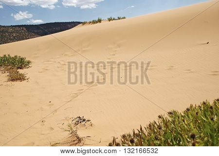 Footprints showing a crossroads in Coral Pink Sand Dunes State Park Utah United States.