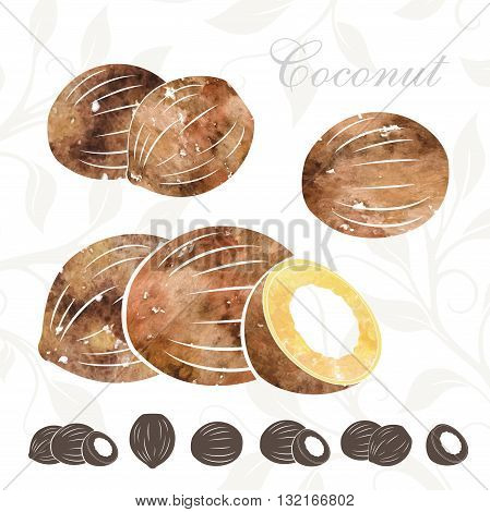 Coconut icons set. Coconuts illustration with watercolor texture
