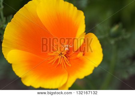 Photo of the beautiful colored flower outdoors.