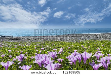 Beatiful Pnk Flower Beside The Beach With Nice Background Color