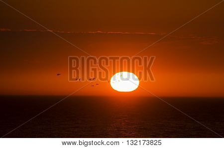 Flock of ducks is flying over the sea in the background of the sunset sun