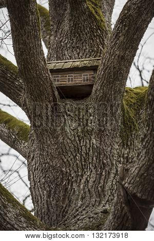 Toy house is standing on the branches of tree