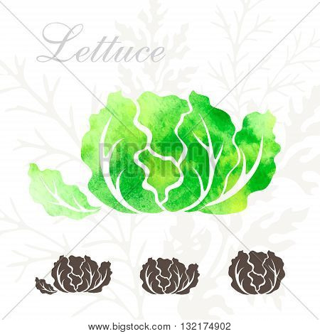 Lettuce icons set. Vegetables icon with watercolor texture