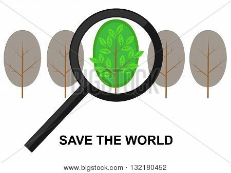 bridging the magnifying glass on a green tree among dried
