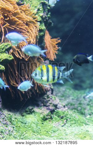 Group Of Colorful Fish In Close-up