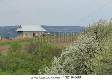 Stone cottage at the top of the hill with green forest and blossoming tree at the foreground