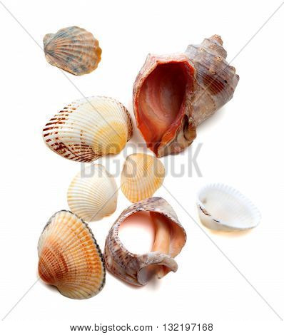 Sea shells isolated on white background .