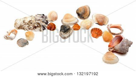 Collection Of Seashells With Copy Space