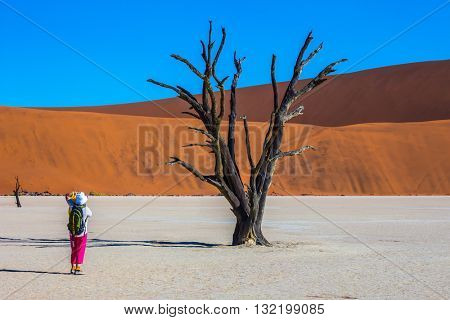 The dried-up lake surrounded by orange dunes. Elderly woman photographing picturesque dried tree. Travel to Namibia
