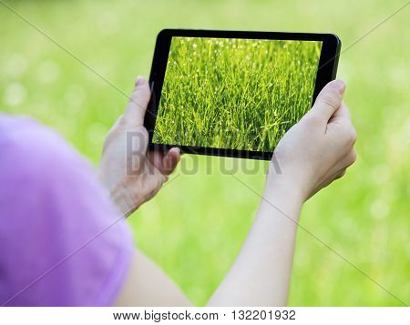 Woman's hands holding a tablet making a picture of grass green background