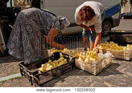 Lutsk, Ukraine - June 8, 2011: Two women sell ducklings from boxes on the ground on farmers market in Lutsk. Small-scale family farms are widespread in Ukraine.