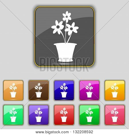 Vase Of Flowers Icon Sign. Set With Eleven Colored Buttons For Your Site. Vector