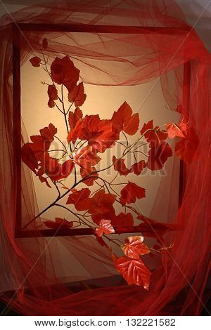 a branch with red leaves simulating enter through a window surrounded by a red tulle
