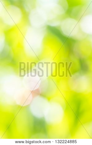Blurring background of the fruit garden with sun glare on the leaves and berries on a sunny summer day