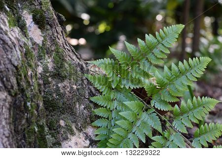 Fern growing on an old tree bark