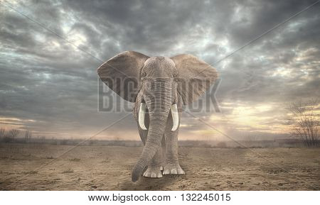 An African elephant in sahara under a cloudy sky