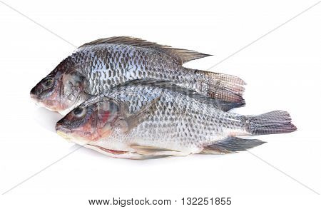 Gutted and scaled Nile Tilapia fish on white background