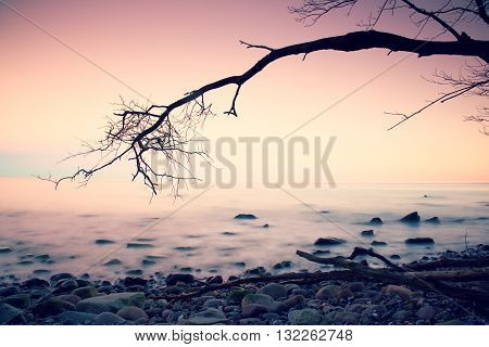 Romantic Colorful Sunset At Wavy Sea. Stony Beach With Tree And Pink Sky In Water Mirror