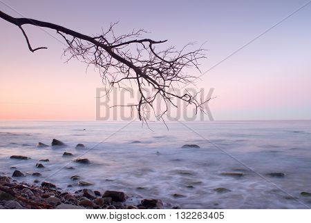 Romantic Atmosphere,  Colorful Sunset At Sea. Stony Beach With Bended Tree And Hot Pink Sky In Water