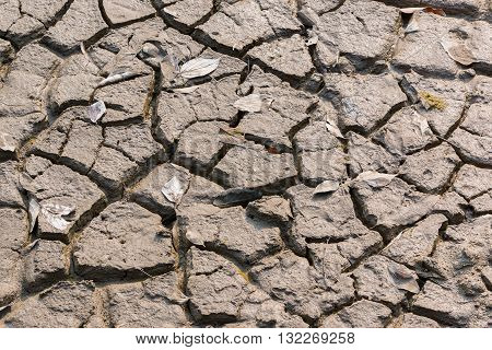 Arid and dry cracked earth in forest soil with dry leaves.