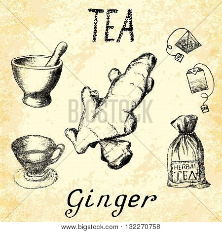 Ginger herbal tea. Set of vector elements on the basis hand pencil drawings. Ginger root tea bag mortar and pestle textile bag cup. For labeling packaging printed products