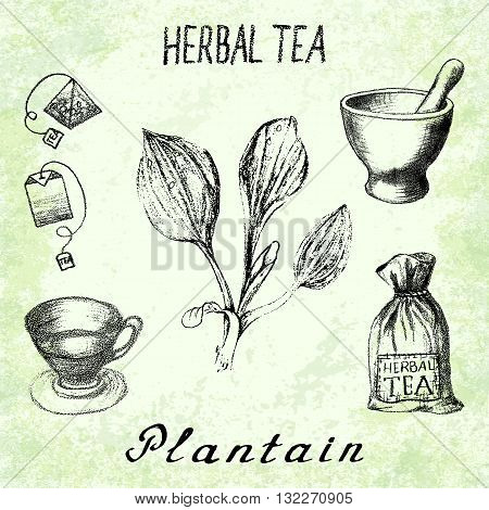 Plantain herbal tea. Set of vector elements on the basis hand pencil drawings. Herb Plantain tea bag mortar and pestle textile bag cup. For labeling packaging printed products