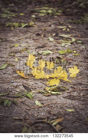 twig with yellow leaves lying on dark ground, filter