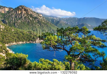 Pine trees on the southern coast of Turkey. Calm blue sea and clear sky. View of Mediterranean Sea from Cape Gelidonya. Spring sunny day in Antalya province, Turkey.